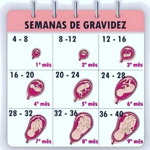 Diário de Gravidez: 4 a 6 semanas